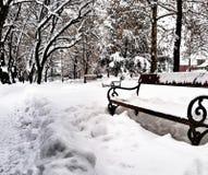 Arbres congelés par neige d'hiver froids Images libres de droits