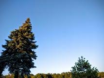 Arbres coniféres dans le coucher du soleil photographie stock