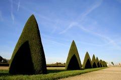 arbres coniques Versailles photo stock