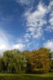 Arbres contre le cloudscape photos libres de droits