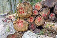 Arbres coupés dans une forêt Images libres de droits