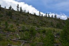 Arbres coupés sur une montagne Photographie stock libre de droits