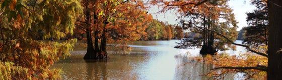 Arbres courtauds de lac et d'automne Images stock