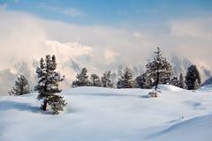 Arbres couverts de gelée et de neige en montagnes Photo stock