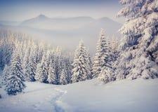 Arbres couverts de gelée et de neige en montagnes Photographie stock libre de droits