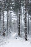 Arbres couverts de neige. Photo libre de droits