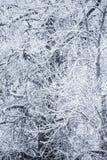 arbres couverts de neige dans un jour d'hiver photos stock
