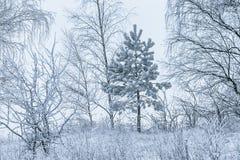 arbres couverts de neige dans un jour d'hiver photos libres de droits