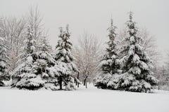 arbres couverts de neige de sapin Photographie stock libre de droits