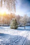 arbres couverts de neige en parc de ville image stock