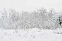 Arbres couverts de neige le soir d'hiver Images stock
