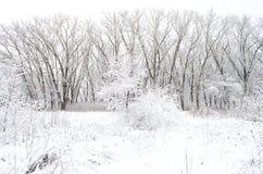 Arbres couverts de neige le soir d'hiver Image libre de droits