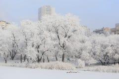 arbres couverts de neige par la rivière photo stock