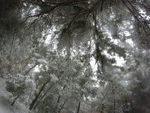 Arbres couverts de neige de poudre images libres de droits