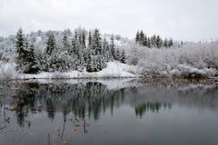 arbres couverts de neige sur l'eau Photos stock