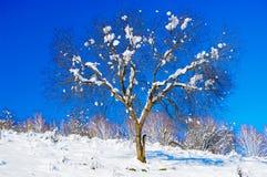 Arbres couverts de neige sur une clairière d'hiver Photo stock