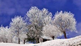 Arbres couverts par la neige dans l'horizontal hivernal images libres de droits