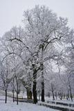 Arbres couverts par neige après tempête image stock