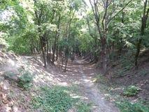 Arbres croissants dans la forêt et le jardin image libre de droits