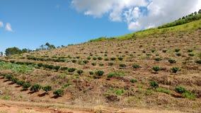 Arbres croissants de plantation et de culture photographie stock