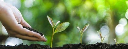 Arbres croissants pour l'entretien de croissance et d'arbres ou de nature de protection de l'environnement photos libres de droits