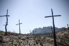 Arbres cruciformes après incendie de forêt photos stock