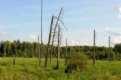 Arbres défraîchis au bord de forêt Photographie stock libre de droits