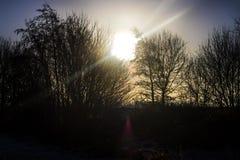 Arbres déprimés coucher du soleil, axes de SunlightRays d'éclater la lumière du soleil Image libre de droits