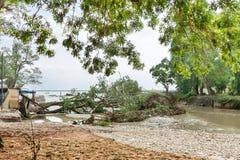 Arbres déracinés après l'inondation Images stock