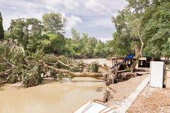 Arbres déracinés après l'inondation Photo libre de droits