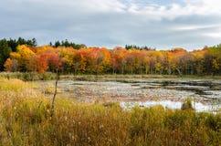 Arbres d'érable à côté d'un étang en automne Photo stock
