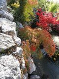 Arbres d'étang de jardin Image stock