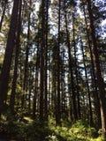 Arbres d'île de Vancouver photographie stock libre de droits