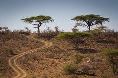 Arbres d'acacia dans le Samburu photo libre de droits