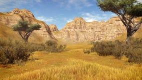 Arbres d'acacia parmi les falaises 2 de grès Images stock