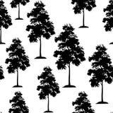 Arbres d'acacia sans couture Photographie stock