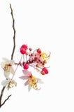 Arbres d'amande en pleine floraison Photographie stock