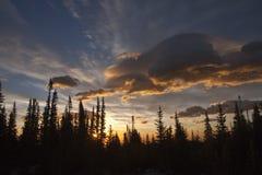 Arbres d'arbre de silhouette Image stock