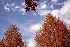 Arbres d'automne Photos libres de droits