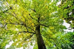 Arbres d'automne Image stock