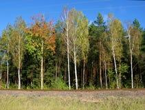 Arbres d'automne. Photo libre de droits