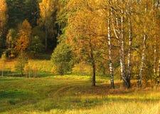 Arbres d'automne Image libre de droits