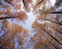 Arbres d'automne photographie stock