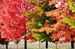 Arbres d'automne photo libre de droits