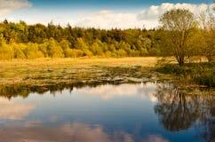Arbres d'automne au-dessus de lac, Irlande image libre de droits