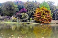 Arbres d'automne autour de lac Photo libre de droits