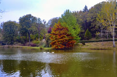 Arbres d'automne autour de lac Images libres de droits