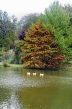 Arbres d'automne autour de lac Arbres de chute reflétés dans le lac Photographie stock libre de droits