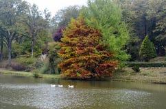 Arbres d'automne autour de lac Arbres de chute reflétés dans le lac Images libres de droits
