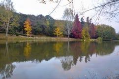 Arbres d'automne autour de lac Arbres de chute reflétés dans le lac Images stock